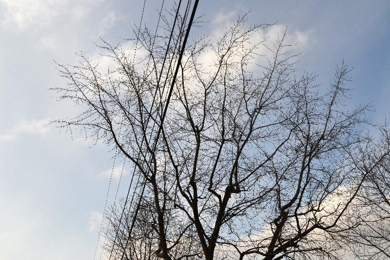 2016 Tree Trimming Update